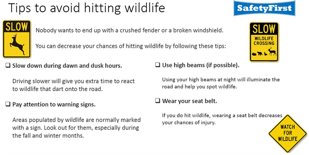 Tips to avoid hitting a deer