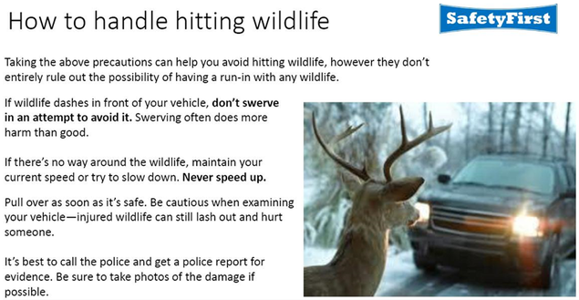 How to handle hitting wildlife